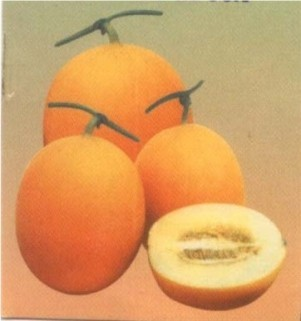Cucumber-Dosakkai - Product Image