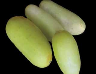 Cucumber-Puneri (Poona Kheera)-TEMPORARILY SOLD OUT - Product Image