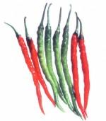 Hot Pepper-Jyoti - Product Image