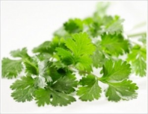 Coriander-Kalmi - Product Image