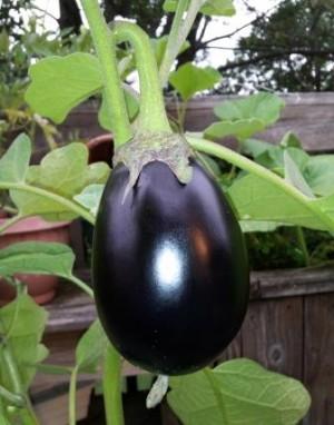 Eggplant - Bharta - Product Image