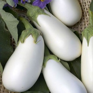 Eggplant - Cloud Nine - Product Image