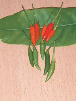 Hot Pepper-Kanthari - New for 2013 ! - Product Image