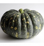 Pumpkin Bliss- OUT OF STOCK DO NOT ORDER! - Product Image
