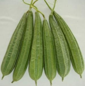 Ridge Gourd - Madhuri  - Product Image