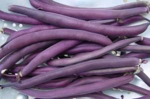 Royal Burgundy Bean - Product Image