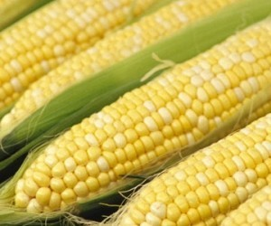 Sweet Corn-Serendipity Bicolor - Product Image