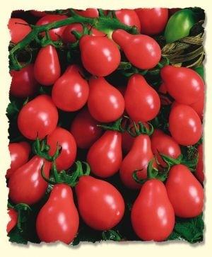 Tomato - Gumdrop  - Product Image