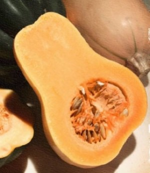 Butternut Squash-Waltham - Product Image