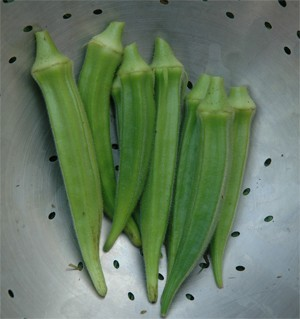 Okra-Chanchal-OUT OF STOCK! - Product Image