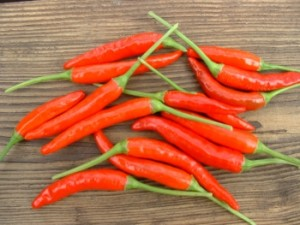 Hot Pepper-Damini - Product Image