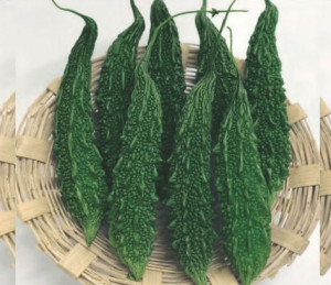 Bitter gourd - Bahadur - Product Image