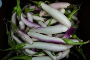 Eggplant - Bride - Product Image