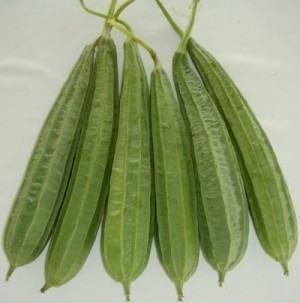 Ridge Gourd - Madhuri-OUT OF STOCK - Product Image