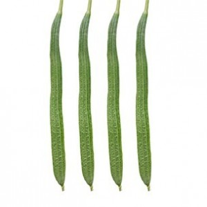 Ridge gourd-Rishi- out of stock! - Product Image