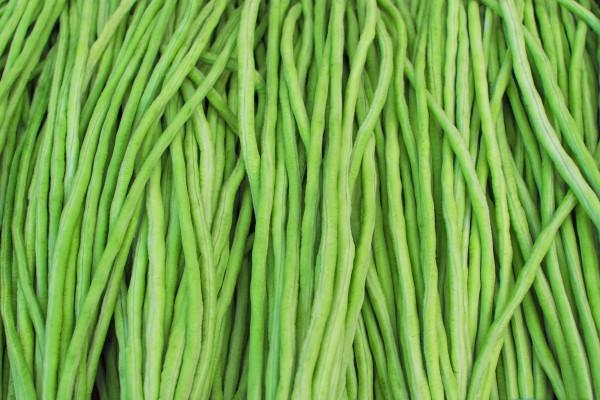 Yard Long Bean Usha